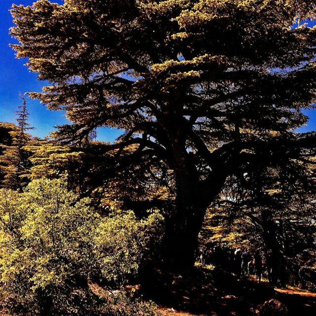 Photo by @kaisrami thanks for sharing 🙂 cedars arez mountlebanon ...