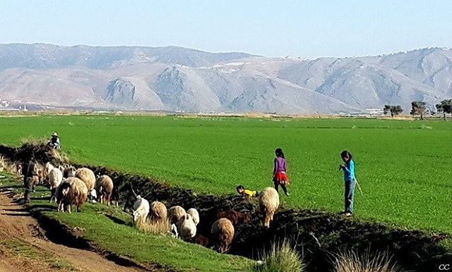 lebanon bekaa green fields aamiq livelovelebanon livelovebekaa ...