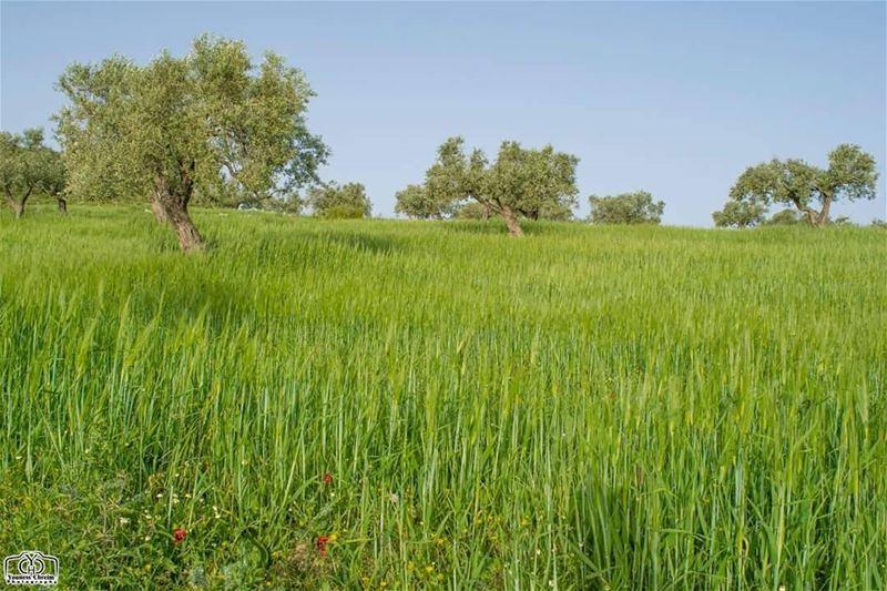 أسعد الله صباحكم بكل خير ☺ nature naturelebanon lebanon southlebanon ...