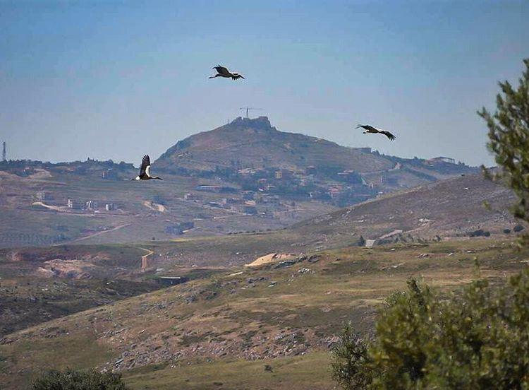 هون اول الكون وكل الحلا whatsuplebanon ig_lebanon insta_lebanon ... (Jarmaq, Al Janub, Lebanon)