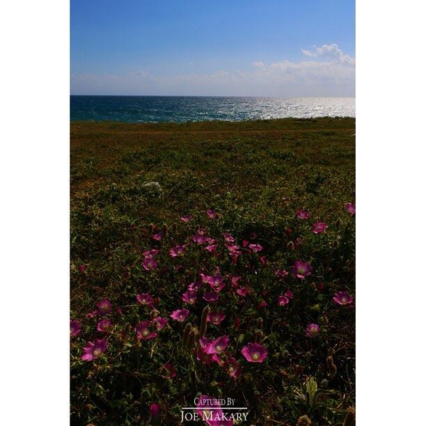 sea summer water flowers beautifullebanon livelovelebanon ...