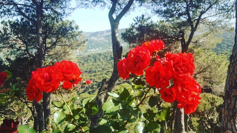 يا مساء الورد يا عصفورتي... insta_lebanon instalebanon nature ...