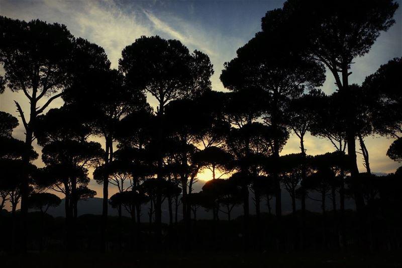 Kind of sunset 🌅 ... sunset sunsetlovers sunset_pics landscape... (Jezzîne, Al Janub, Lebanon)