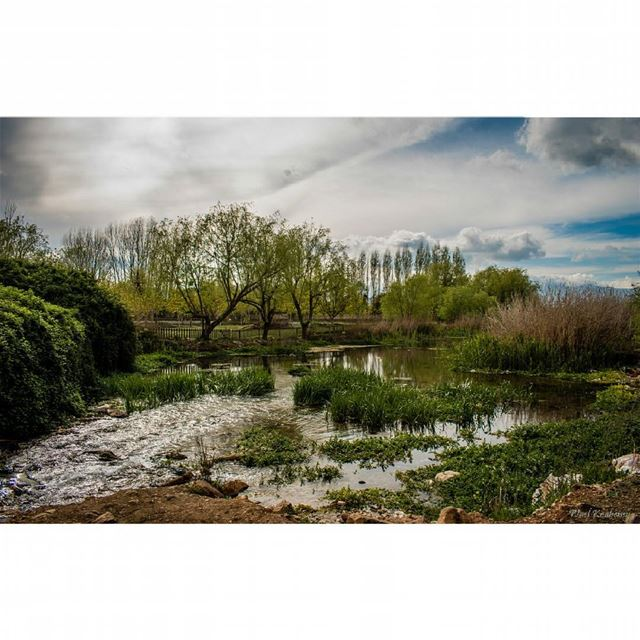 wetlands  trees  lebanon  bekaa  vegetation  sky  clouds  grass  wetland ...