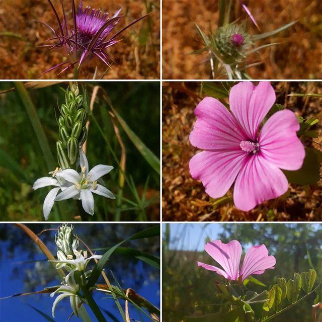 naturalbeauty naturalpicture flower flowers springflowers spring ... (Hasbaya)