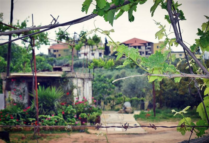 nikon old house roses flowers greens trees lebanon roamtheplanet nature... (Zgharta)