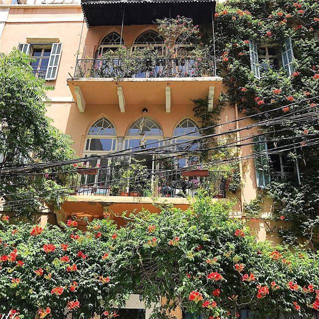 Beautiful Achrafieh 🌼🌸🌺 insta_lebanon whatsuplebanon lebanonspotlights... (Tabaris)