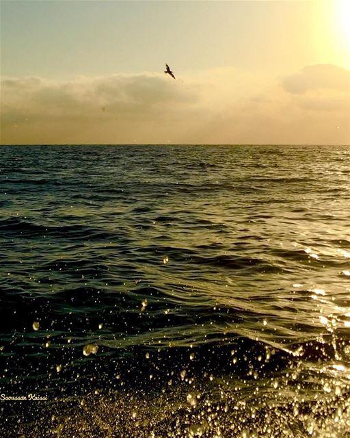 seagull sea sunset ...