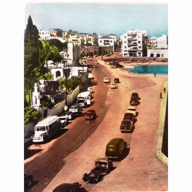 بيروت الزيتونة عام ١٩٥٤ ،