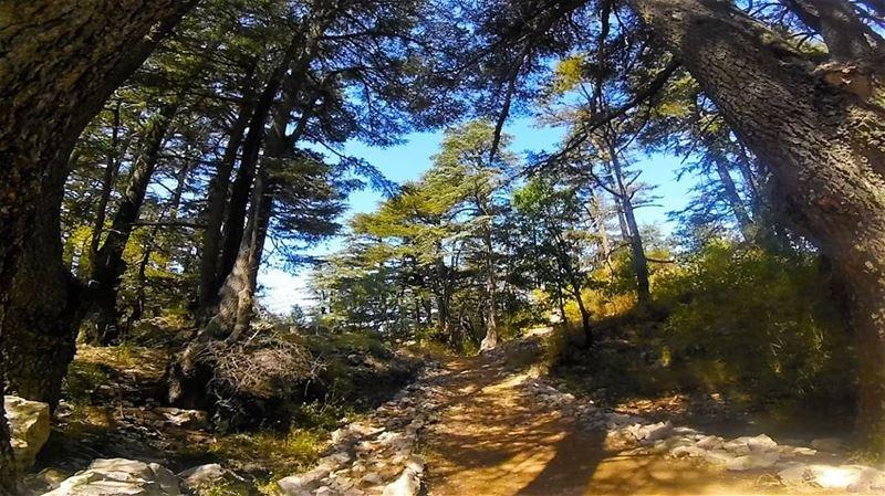 تنورين (📸 لبنان 24) lebanon spring nature tannourine colors rose ...