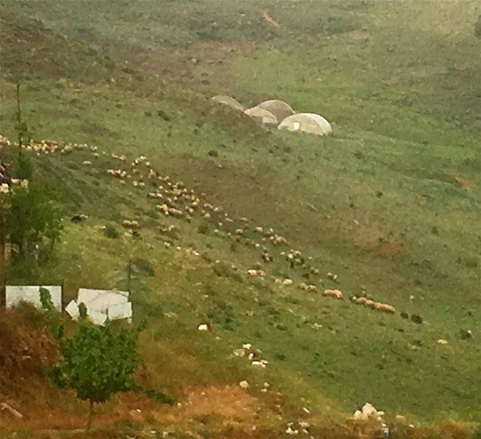 lebanon (southlebanon Al Mahmoudieh) amazing lebanesenature ...