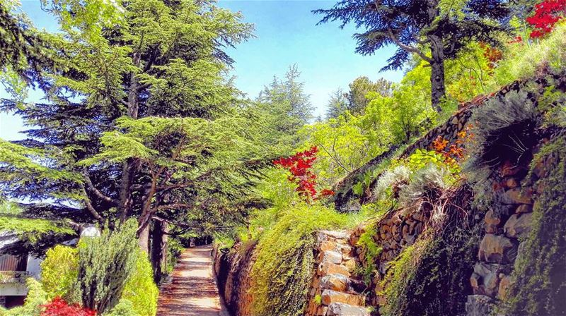 Gardens of Babylon on the Mediterranean. lebanon cedar trees garden ... (Lebanon)