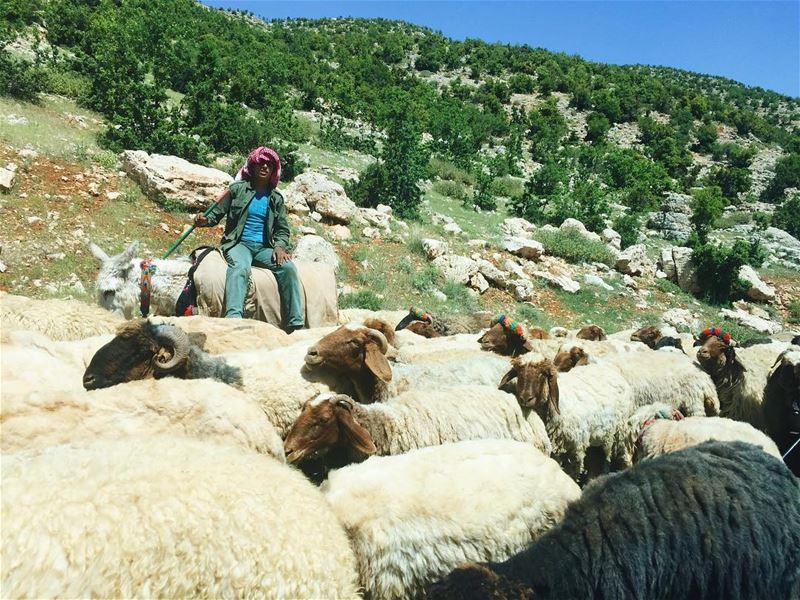 Natureland 🌳🐑 mytinyatlas igerslebanon vsco vscocam instalebanon... (Beqaa Governorate)
