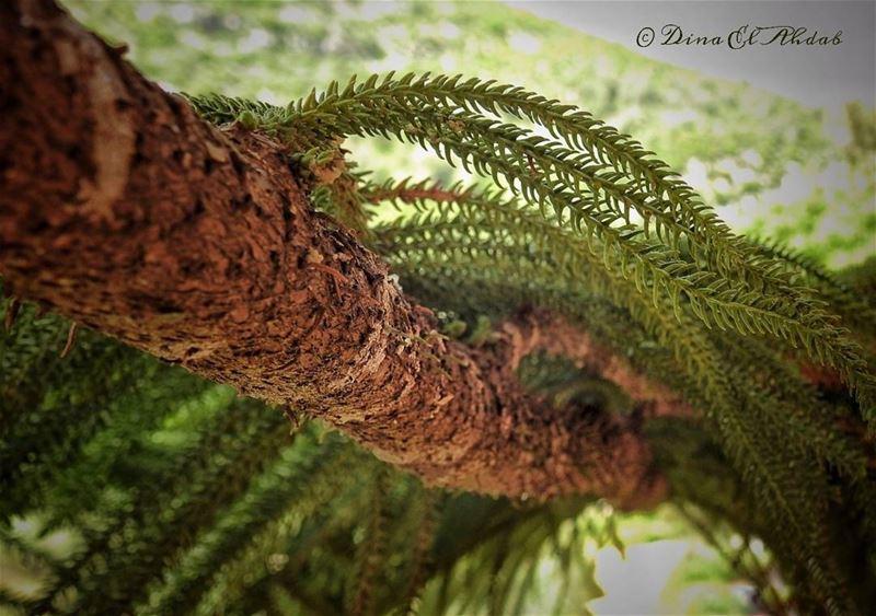 Elle dit toujours quelque chose...__ 961lens naturephotography ...