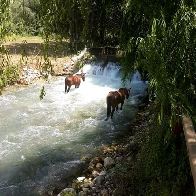 madeinehden ehdenadventures horse water cooling weather hot ... (Massaya Zaman Restaurant)