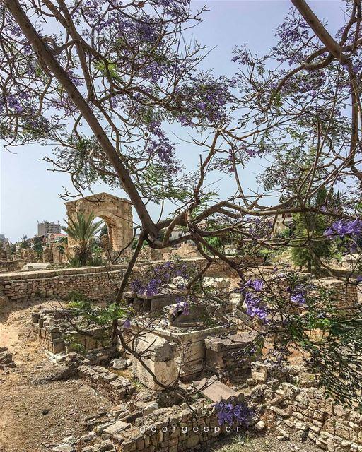 Roman Ruins of Tyre City, Lebanon 🇱🇧..... proudlylebanese ... (Tyre, Lebanon)