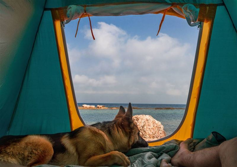 Morning view🌊🐶..... morning view summer tent dog germanshepherd... (Chekka)