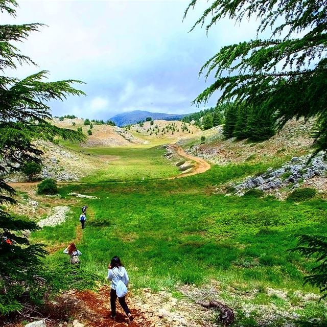 --------------------------------------------------------------------------- (Al Shouf Cedar Nature Reserve)