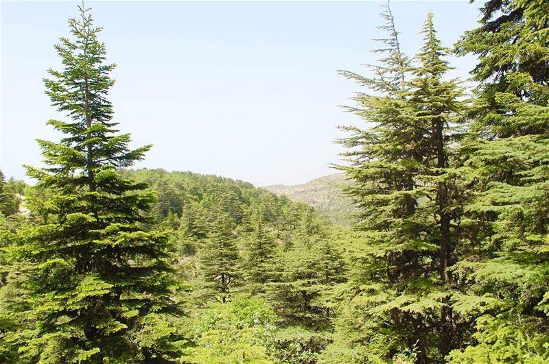 ehden ehdenspirit lebanon insta_lebanon liveloveehden livelovebeirut... (Horsh Ehden Nature Reserve)