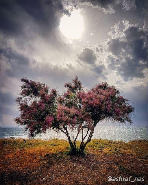بآخر طريق المسافي شجرة ليلكية...يا عمر ما بينتسىضلك فايق عليي...يبقى لن (Tyre, Lebanon)