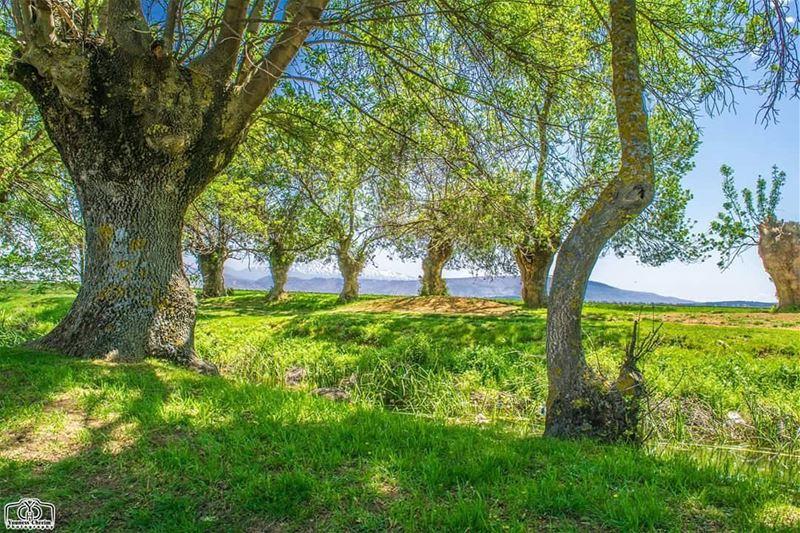 جمعة مباركة من عميق البقاع ammiq ammiqreserve reserve nature ...