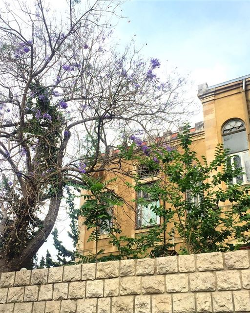 A walk in Beirut 🌿💙 a7labaladbil3alam photo love photograph ... (Achrafieh, Lebanon)