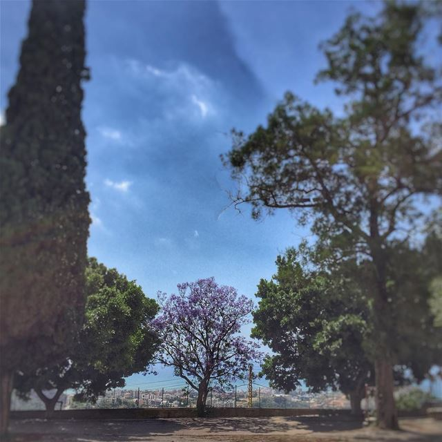 Dare to be different... Trees Green Purple LiveLoveLebanon ... (Deir Tamich)