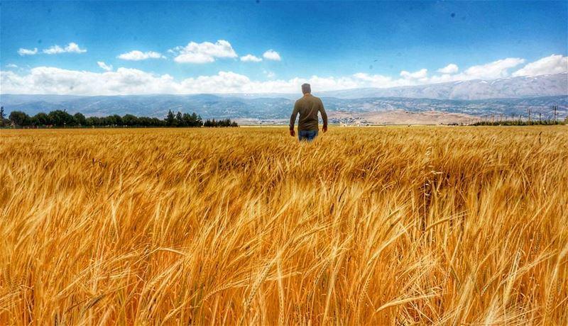 Deir el ahmar off season 🌾🌾🌾🌾🌿 lebanon sunnydays nature ... (Deir el Ahmar)