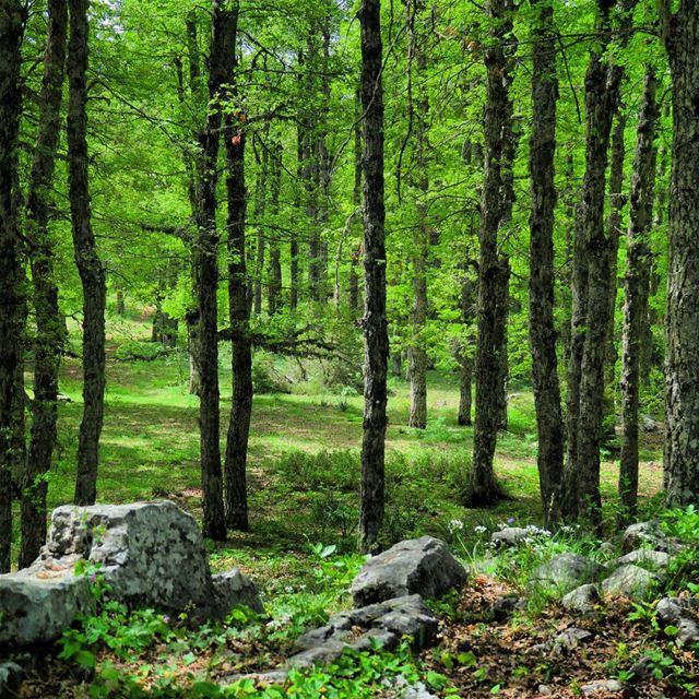 Born again 🌳🌳🌳 trees green spring nature outdoors akkar qammoua ... (غابة العزر-القموعة)