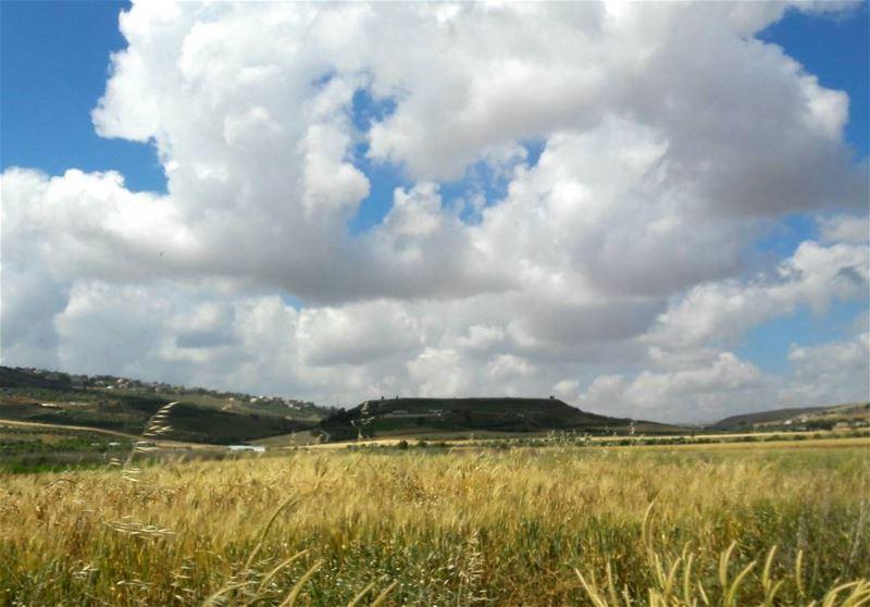 And summer is coming soon ..Yellow fields livelovemarjayoun khiam ... (Al Khiyam, Al Janub, Lebanon)