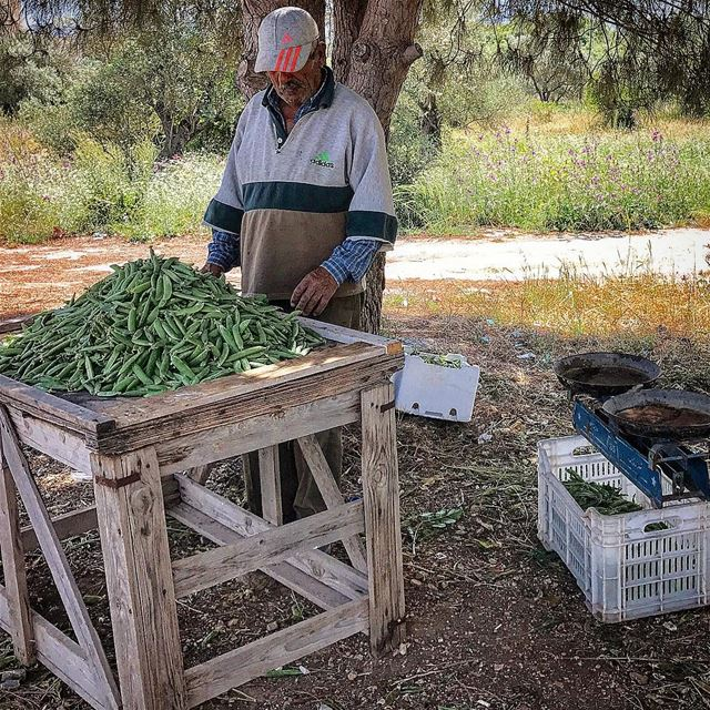 nature views green bekaa farmer production lebanese food pea ...