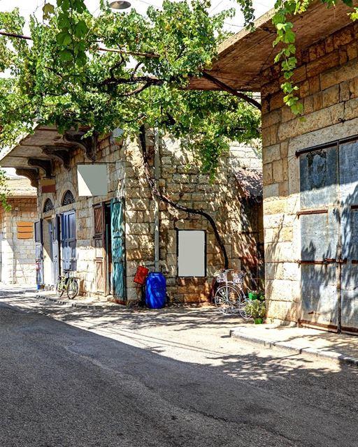 Cenário típico de um vilarejo libanês. Videiras, casas de pedra e uma... (Douma, Liban-Nord, Lebanon)