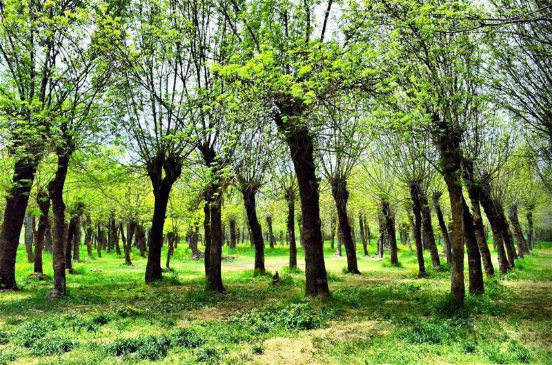 Green........ lebanon beirut vscocam beautifuldestinations ... (Beirut, Lebanon)