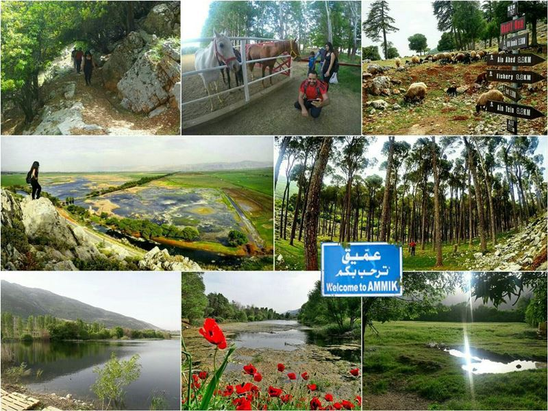 Join us this Thursday 25 May to have the chance to hike the largest... (`Ammiq, Béqaa, Lebanon)