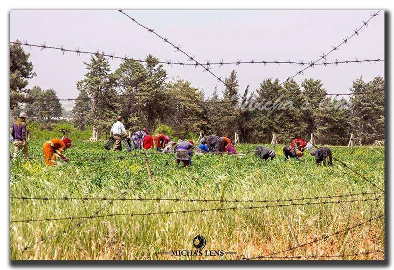 Bikaa valley lebanonbylocal discover961 lebanon thebestinlebanon ...