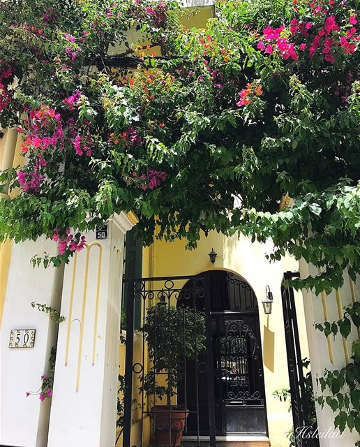 Flowers 🌺 good morning 🌺❤️🌹🌸 ig_lebanon lebanontimes libeirut ... (Tabaris)