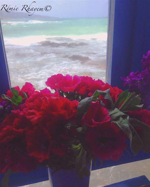 ~ et tranquillement elle regarda la mer~ (Batroûn)