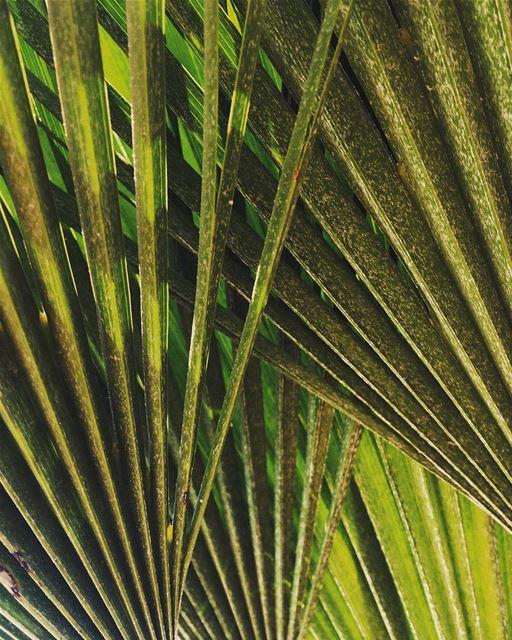 🌵S U M M E R 🌴 sun green naturelovers natureaddict nature ... (Laguava)