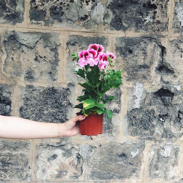 baby girl 🌸@gardenshowleb