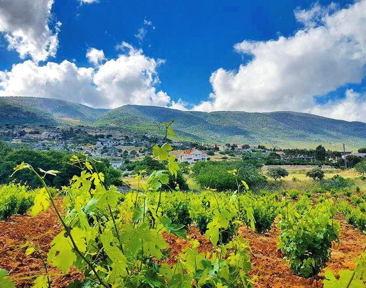 Goodmorning❤❤❤ villagelife farming mountainsoflebanon mountains ... (West Bekaa)