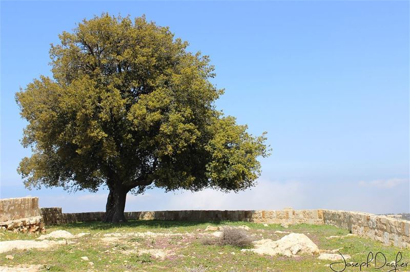 🌳Faites comme l'arbre;Changez vos feuilles, mais gardez vos racines......