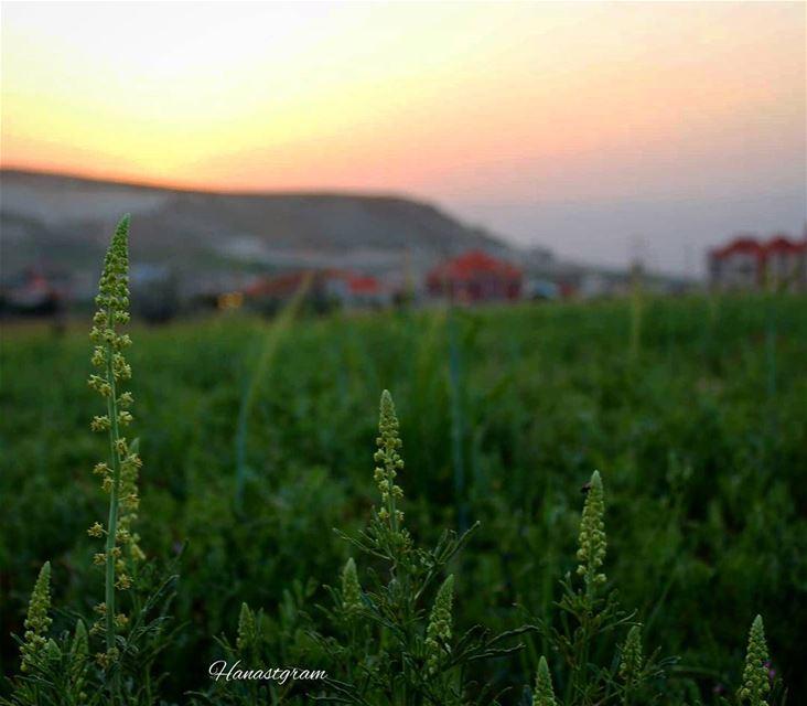 لهذا المساء غرُوب أنيق .. خلفهُ ضيف عزيز،، طال إنتظاره....... رمضان جسرٌ مُ