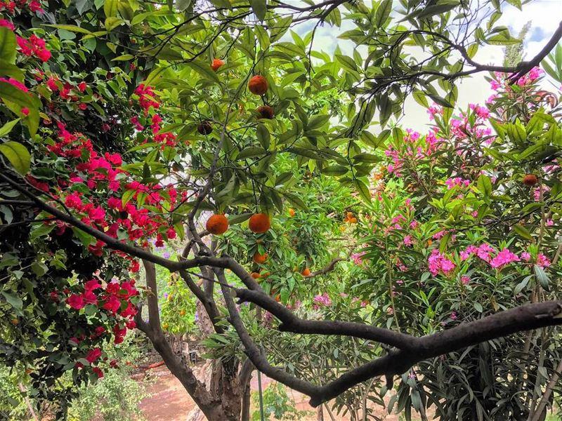 🌺🍊🌸• lebanonhouses livelovelebanon livelovebeirut beiruting ... (Zouk Mosbeh)