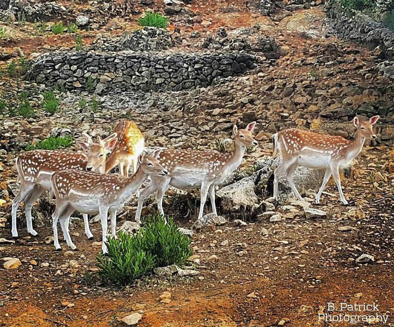 Lebanese wildlife 🌲... reserve lebanon nature wildlifeplanet ... (Beïno, Liban-Nord, Lebanon)