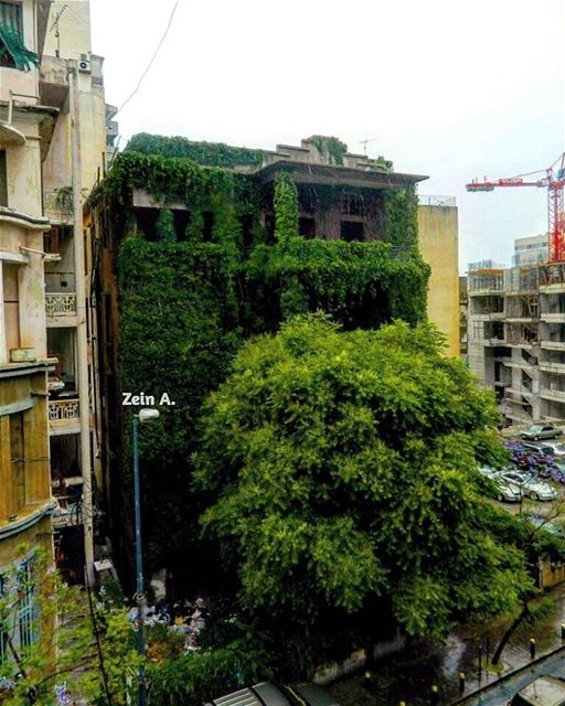 good evening green building leaves travel tourism landscape ... (Spears - Hamra)