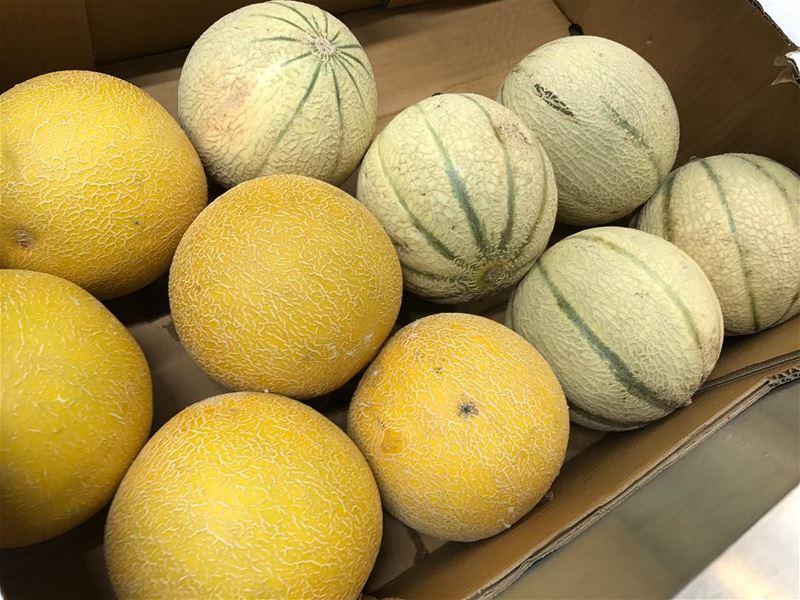 Yummy yellow organic melons 🍈 🍈 melon yellow new wow hot yummy ... (The Spot Choueifat)