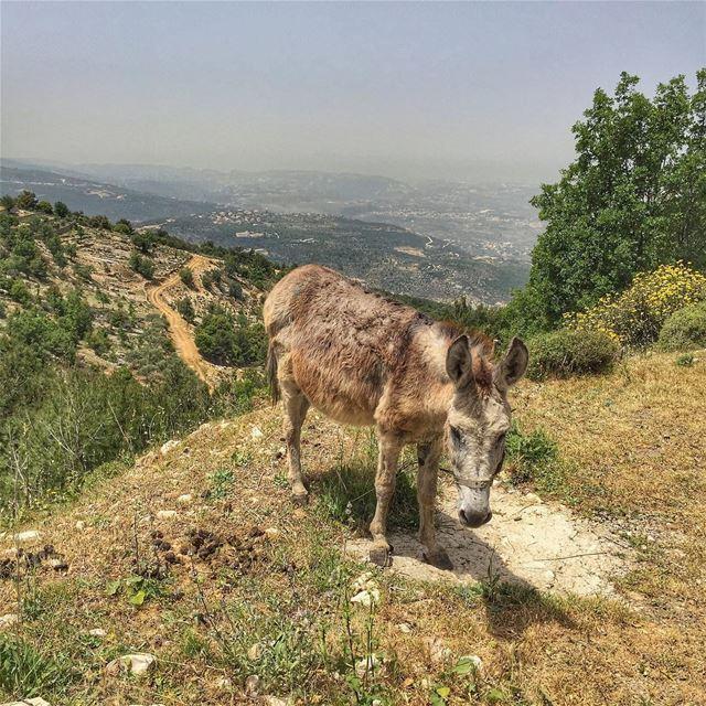 Good morning ... LiveLoveBecharre LiveLoveLebanon wearelebanon ... (Bcharré, Liban-Nord, Lebanon)