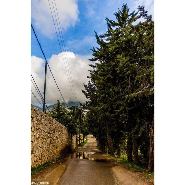 Road for the clouds 🏃♂️ Lebanon liveloveshouf livelovelebanon ... (Al Shouf Cedar Nature Reserve)