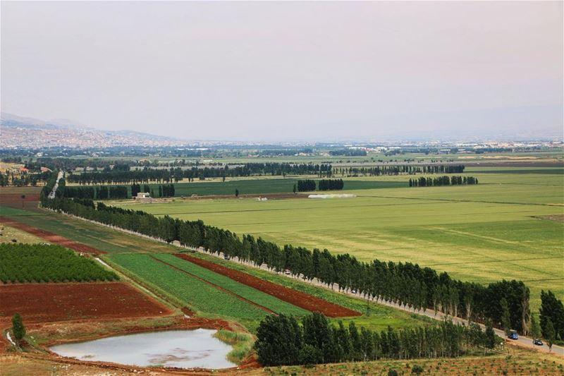 Green field..... greenfields nature naturelovers naturephotography... (West Bekaa)