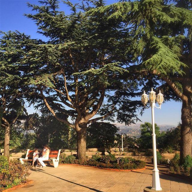 Nature Trees @vitalina.a LiveLoveLebanon wearelebanon lebanonbyalocal... (Mar Chayia)